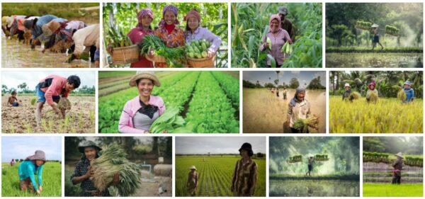 Cambodia agriculture